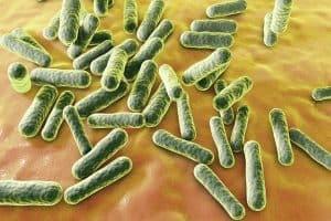 bactérie p. acnes